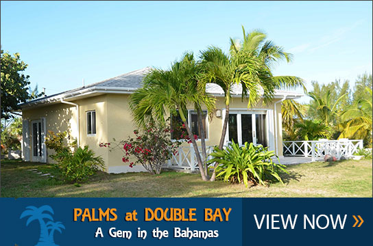 Palms at Double Bay